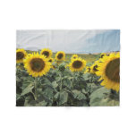 France Provence, View of sunflowers field Fleece Blanket