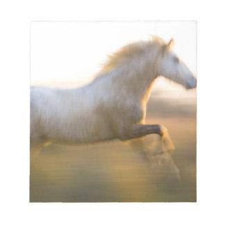 France, Provence. White Camargue horse running. Notepad