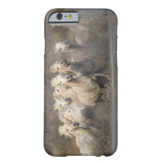 France, Provence. White Camargue horses running Barely There iPhone 6 Case
