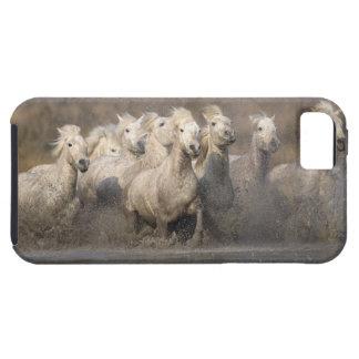France, Provence. White Camargue horses running iPhone SE/5/5s Case