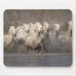 France, Provence. White Camargue horses running Mouse Pad