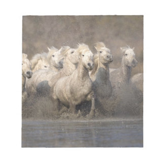 France, Provence. White Camargue horses running Note Pad