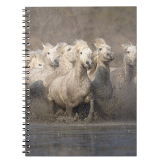 France, Provence. White Camargue horses running Spiral Note Books