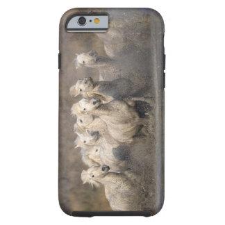 France, Provence. White Camargue horses running Tough iPhone 6 Case