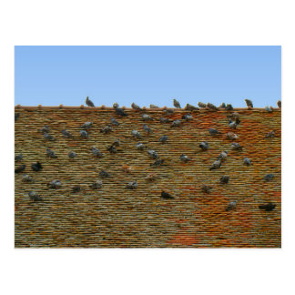 Francia, el Jura, Arbois, palomas en el tejado Tarjetas Postales