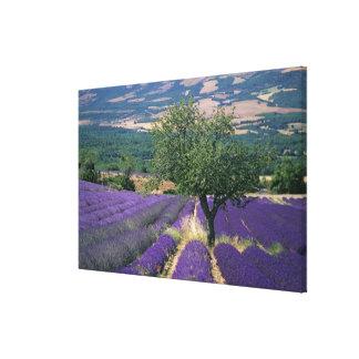 Francia, PACA, Alpes de la Alta Provenza, Impresión En Lienzo Estirada