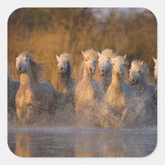 Francia Provence Caballos blancos de Camargue Pegatina Cuadradas