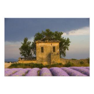 Francia, Provence. Campo de la lavanda y Foto