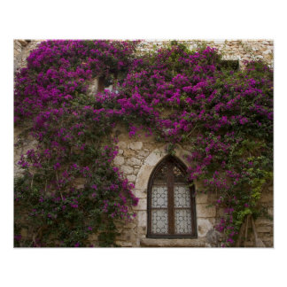 Francia, Provence, Eze. Rosa brillante Posters