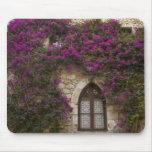 Francia, Provence, Eze. Rosa brillante Tapete De Ratones