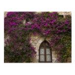Francia, Provence, Eze. Rosa brillante Tarjeta Postal