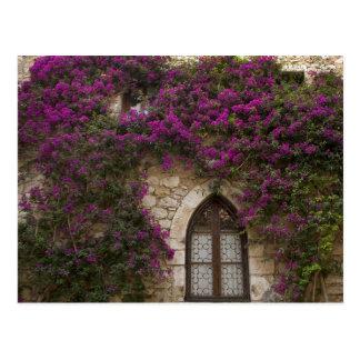 Francia, Provence, Eze. Rosa brillante Postal