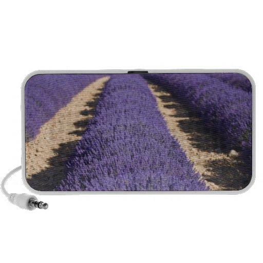 Francia, Provence. Filas de la lavanda en la flora Portátil Altavoces