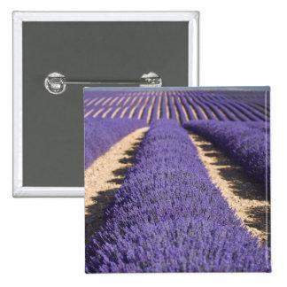 Francia Provence Filas de la lavanda en la flora Pin