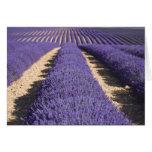 Francia, Provence. Filas de la lavanda en la flora Tarjeta De Felicitación