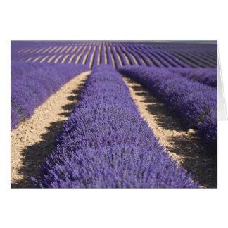 Francia Provence Filas de la lavanda en la flora Tarjetón