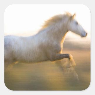 Francia Provence Funcionamiento blanco del cabal Calcomanías Cuadradases