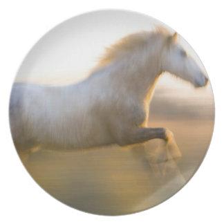 Francia, Provence. Funcionamiento blanco del cabal Plato