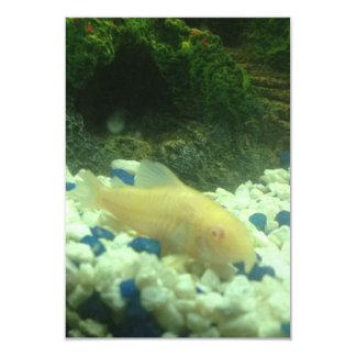 Francis the albino catfish card