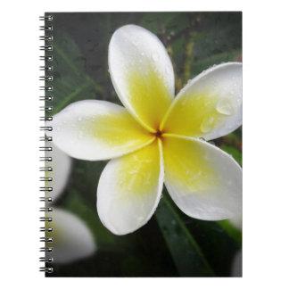 Frangipani And Raindrops Notebook
