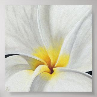 Frangipani blanco póster