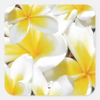 Frangipani_Bouquet, Pegatina Cuadrada