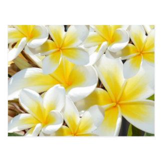 Frangipani_Bouquet, Postales
