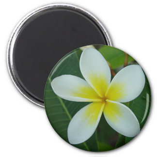 Frangipani Flower 2 Inch Round Magnet