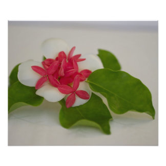 Frangipani Flower Arrangement Photo Print