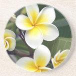 Frangipani flower Cook Islands Beverage Coaster