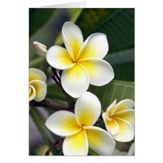 Frangipani flower Cook Islands Card
