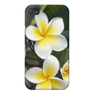 Frangipani flower Cook Islands iPhone 4/4S Cases
