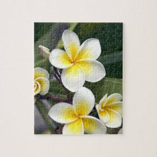 Frangipani flower Cook Islands Puzzle