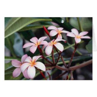 Frangipani Flower Greeting Card