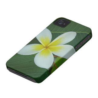 Frangipani Flower iPhone 4 Case