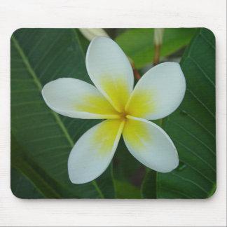 Frangipani Flower Mouse Pad