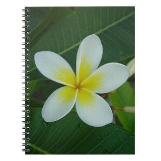 Frangipani Flower Note Books