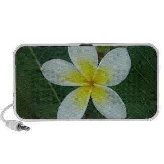 Frangipani Flower Notebook Speaker
