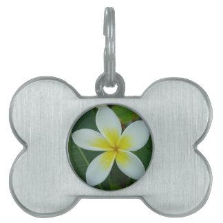 Frangipani Flower Pet ID Tag