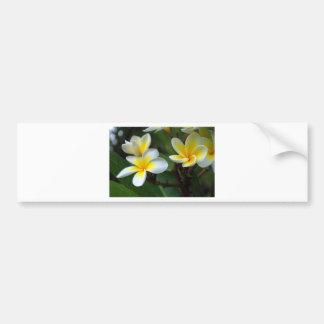 Frangipani_flowers.jpg Bumper Stickers