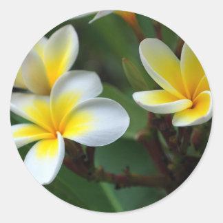 Frangipani_flowers.jpg Classic Round Sticker