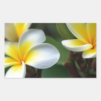 Frangipani_flowers.jpg Rectangular Sticker