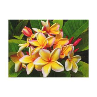 Frangipani hawaiano impresión de lienzo