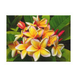 Frangipani hawaiano impresión en lienzo estirada