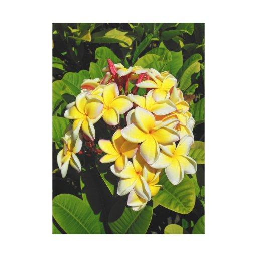 Frangipani hawaiano impresiones de lienzo