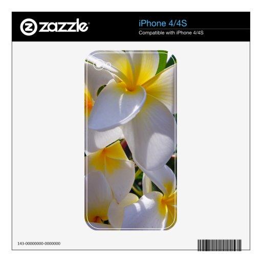 Frangipani hawaiano iPhone 4 calcomanía