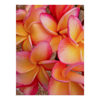 Frangipani hawaiano impresiones