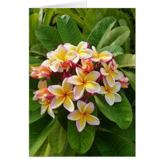 Frangipani hawaiano tarjetas