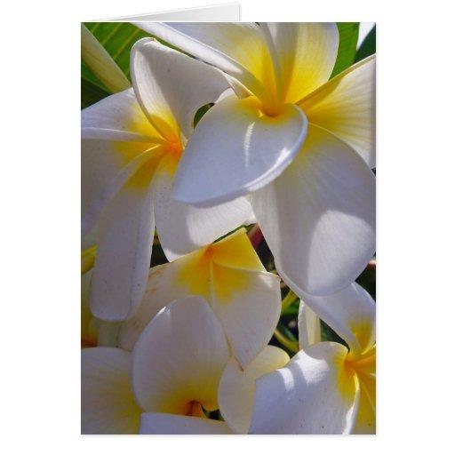 Frangipani hawaiano tarjetón