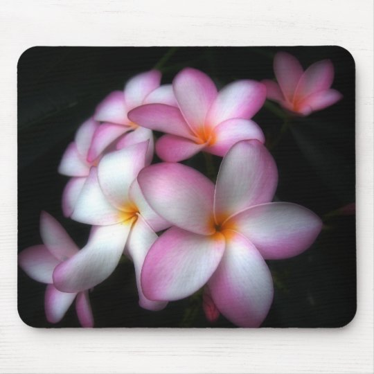 Frangipani in bloom mouse pad